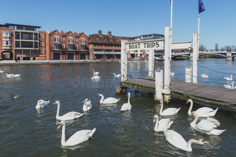 A tourist boat cruise pier by the River Thames located between the towns of Windsor and Eton in Berkshire, UK. Berkshire, UK - April 2018: A tourist boat cruise royalty free stock photo