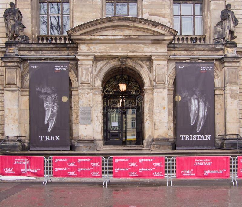 Berliński muzeum historia naturalna, sławna wystawa Tyrannosaurus rex Tristan obrazy stock