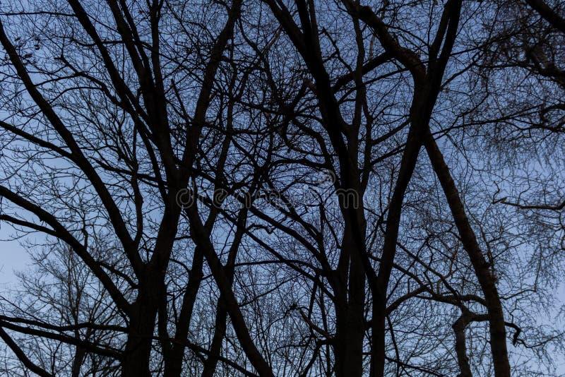 Download BERLIJN, DUITSLAND - JANUARI 14, 2017: Treetops Tegen Blauwe Hemel Stock Afbeelding - Afbeelding bestaande uit avond, kleurrijk: 107700535
