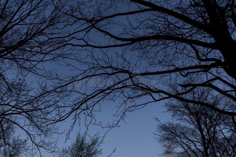 Download BERLIJN, DUITSLAND - JANUARI 14, 2017: Treetops Tegen Blauwe Hemel Stock Afbeelding - Afbeelding bestaande uit bomen, hemel: 107700789