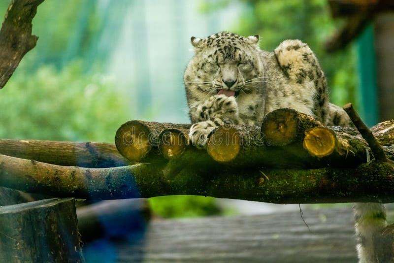 16 05 2019 Berlin, Allemagne Zoo Tiagarden E r images libres de droits