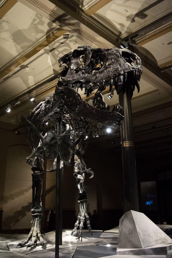 BERLIN, DEUTSCHLAND - 2. August 2016 - ein Skelett des Tyrannosaurus am Naturgeschichtemuseum stockfotografie