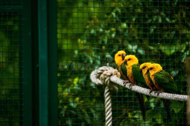 16 05 2019 berlin Germany Zoo Tiagarden Barwi? i jaskrawe egzotyczne papugi siedz? na arkanie ? zdjęcie stock