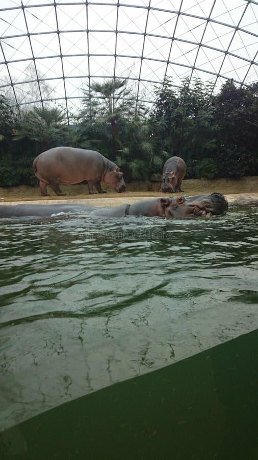 berlin zoo obrazy royalty free