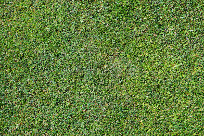Download Bermuda Grass Background stock image. Image of background - 13874367