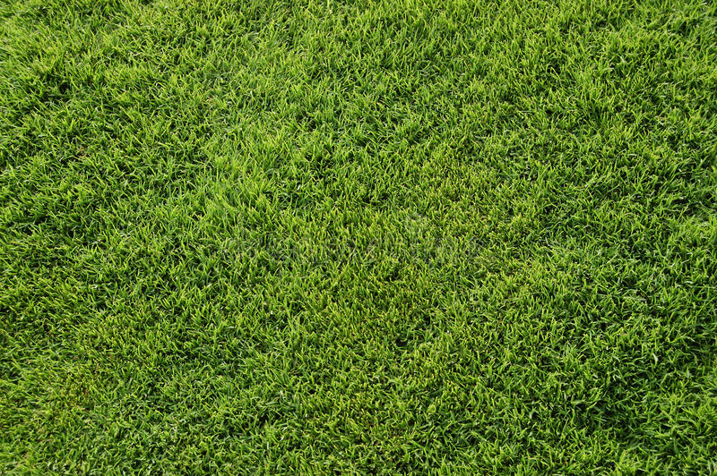 Download Bermuda grass top view stock image. Image of frame, grass - 10692321
