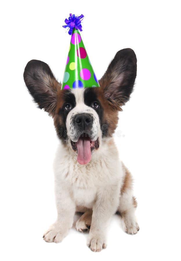 bernard święty urodzinowy kapeluszowy zdjęcia stock