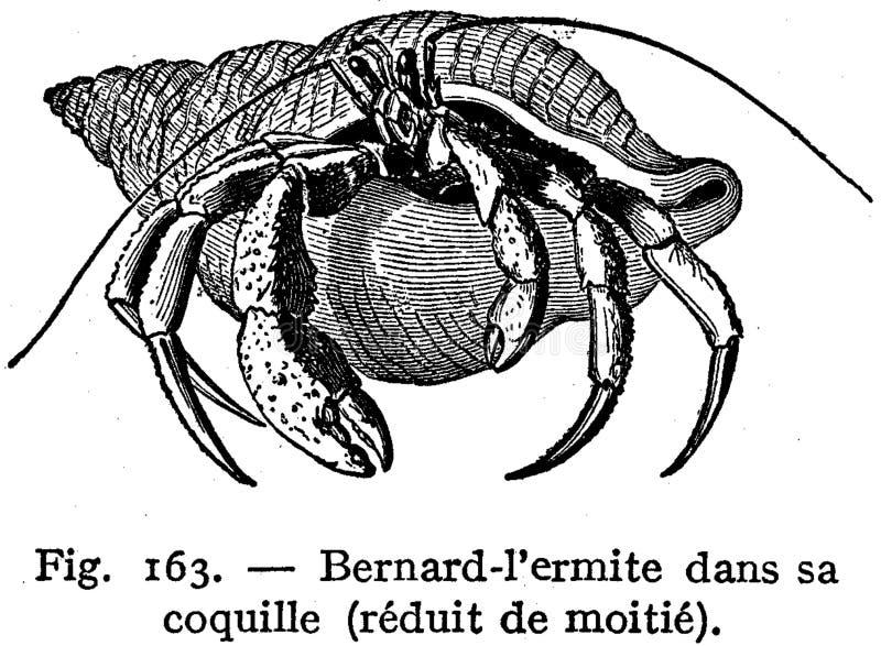 Bernard L'ermite Free Public Domain Cc0 Image