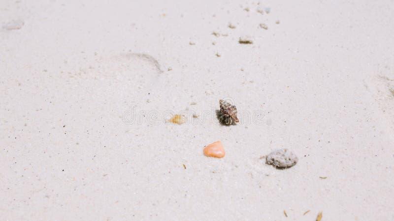 Bernard l'ermite marchant sur la plage image stock
