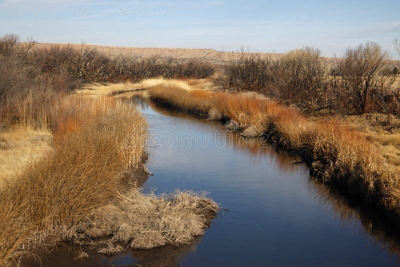Bernardo State Game Reserve. Arizona, USA royalty free stock image