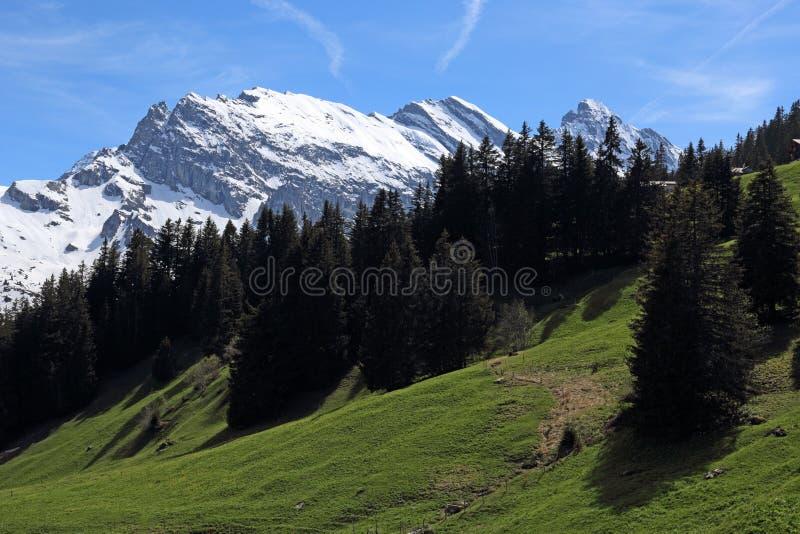 Bernese Highlands royaltyfri fotografi