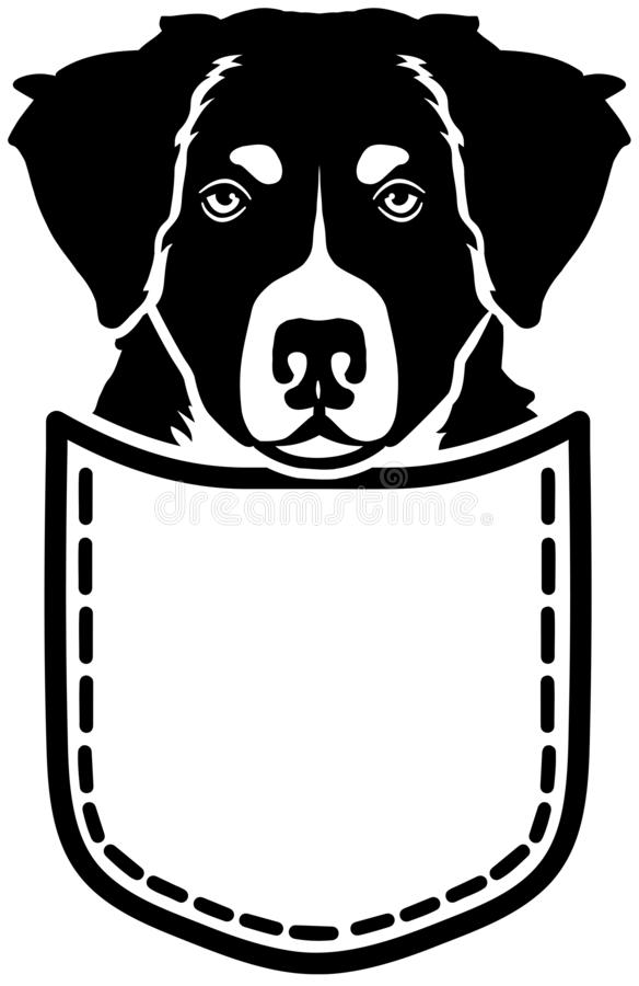 Bernese Mountain dog pocket. Bernese Mountain dog in a pocket royalty free illustration