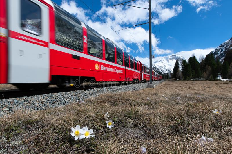 Bernina明确通行证的红色火车在Pontresina附近的在s 免版税库存图片
