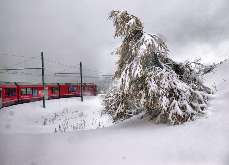 Bernina特级列车和敬佩在瑞士阿尔卑斯的风景看法 图库摄影