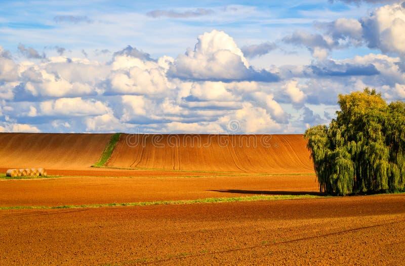 Bernsteinfarbige und gold-farbige Felder stockbild