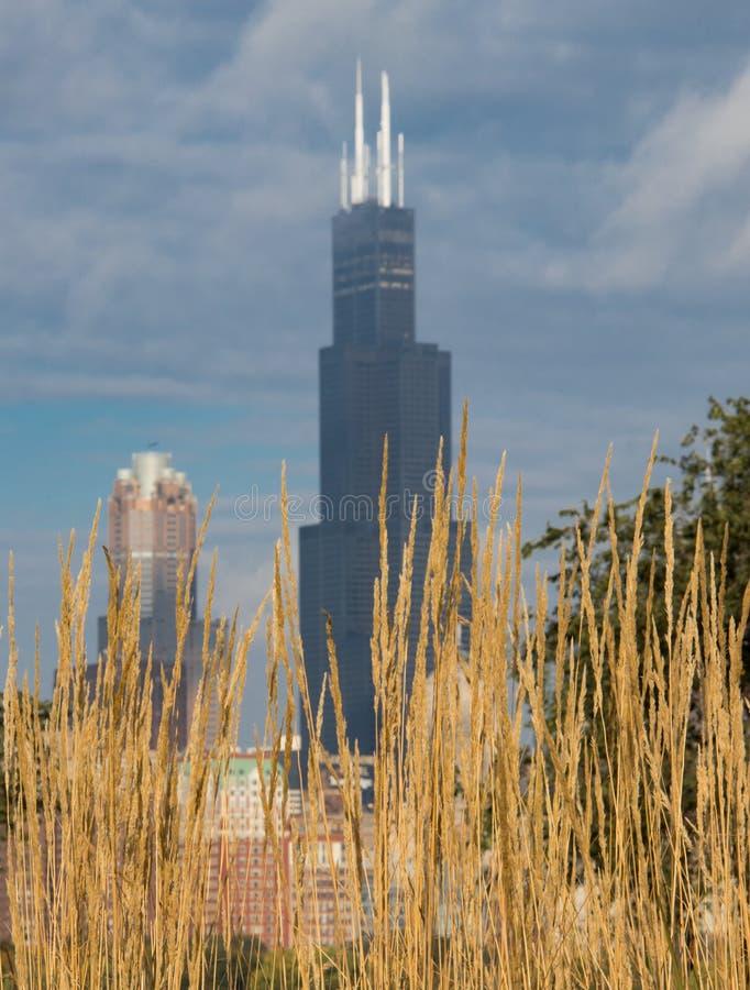 Beroemd Willis Tower in Chicago royalty-vrije stock foto's