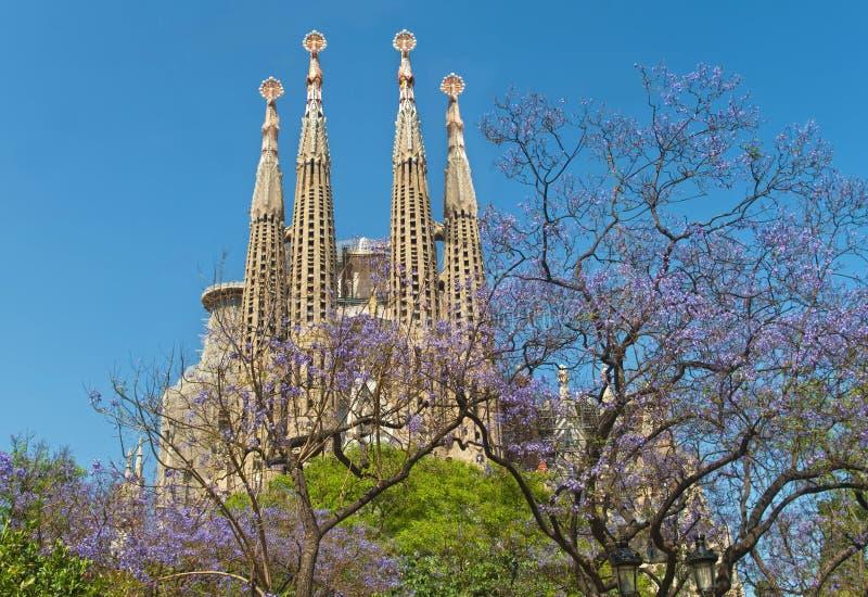 Beroemde katholieke kathedraal en bloeiende bomen op zonnige dag stock afbeeldingen