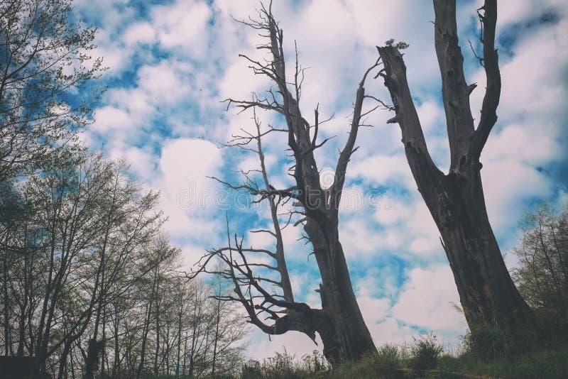 Beroemde Parenboom, Taiwan stock afbeeldingen