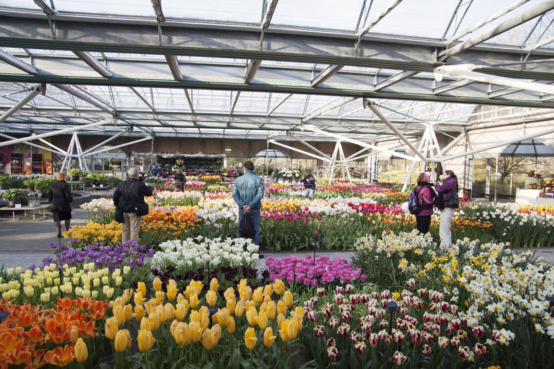 Beroemde tuin Keukenhof royalty-vrije stock afbeelding