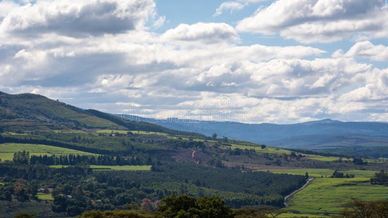 Beroemde wijngaard Kanonkop dichtbij schilderachtige bergen bij de lente royalty-vrije stock afbeeldingen