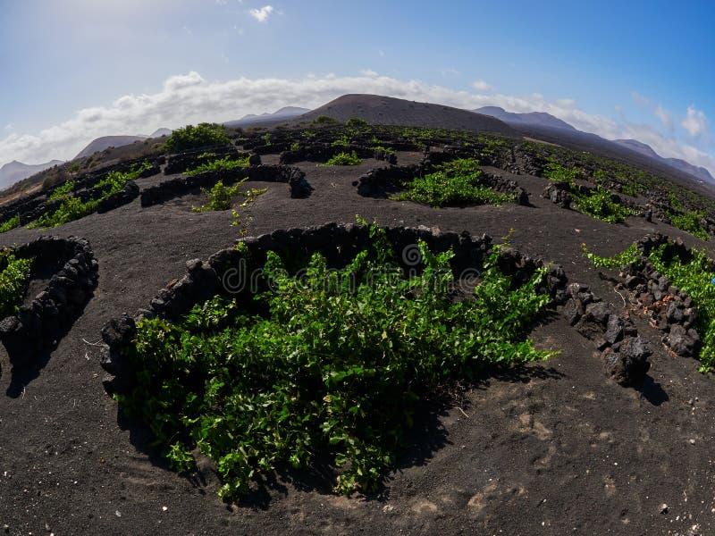 Beroemde wijngaarden van La Geria op vulkanische grond in Lanzarote, Spanje royalty-vrije stock fotografie