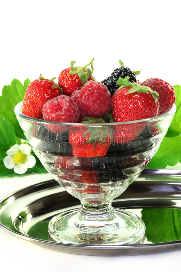 Berries. Fresh forest berries in a small bowl royalty free stock image