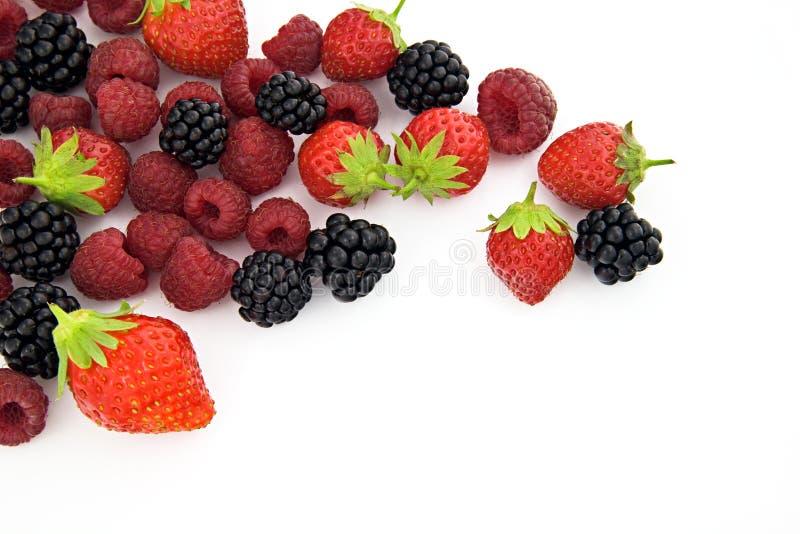 Download Berries stock photo. Image of blackberry, antioxidant - 2988946