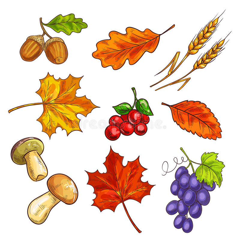 Berries with autumn leaves and mushroom stock illustration