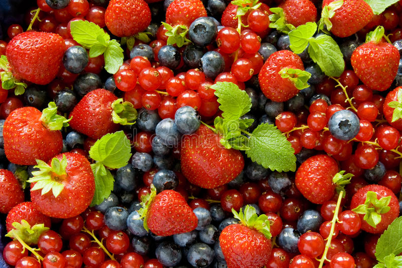 Berries background stock photos