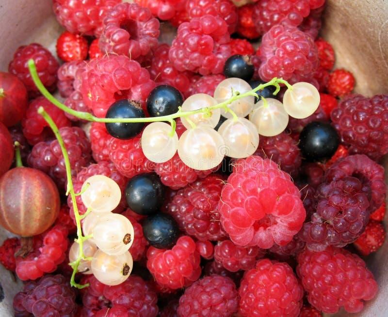 Berries. Background Stock Photos