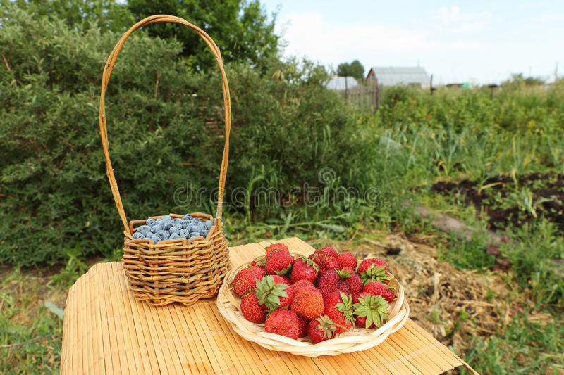 Berries. Baskets with strawberry and a honeysuckle standing on a table on a lawn stock photos