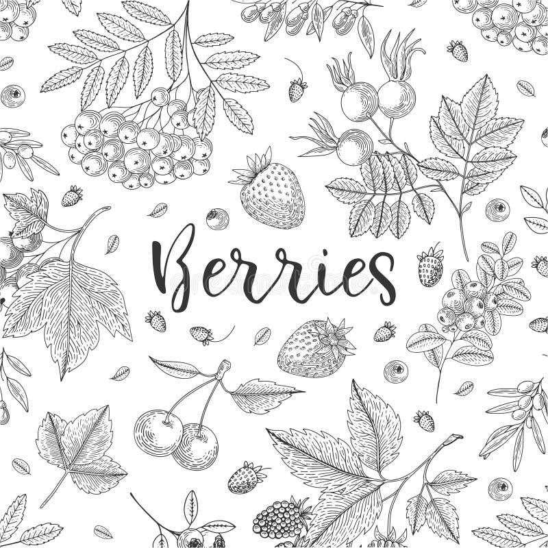 Berries collection top view illustration. Healthy food. Engraving sketch vintage style. Vegetarian food for design menu stock illustration