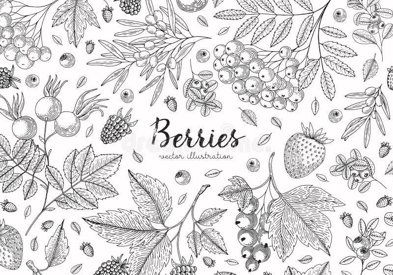 Berries collection top view illustration. Healthy food. Engraving sketch vintage style. Vegetarian food for design menu vector illustration