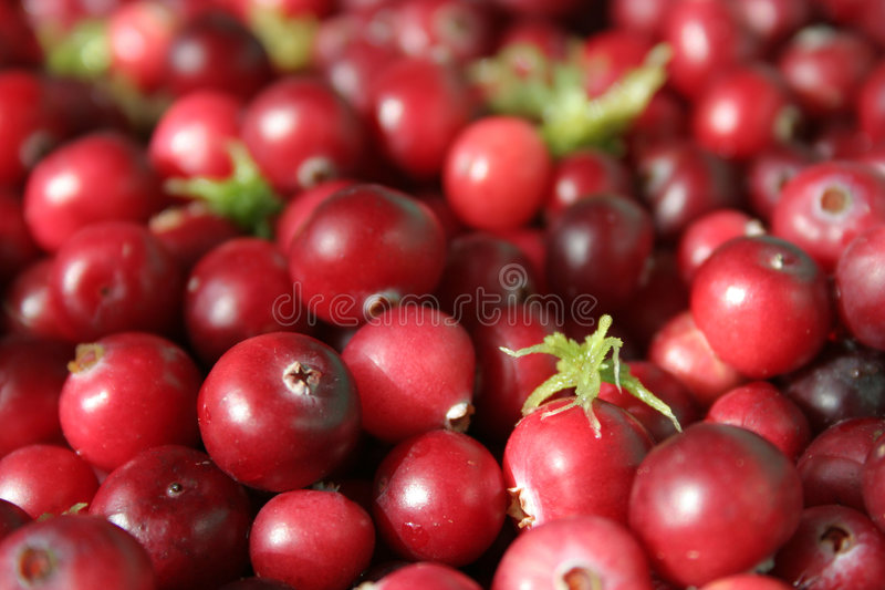 Berries of a cranberry stock photo