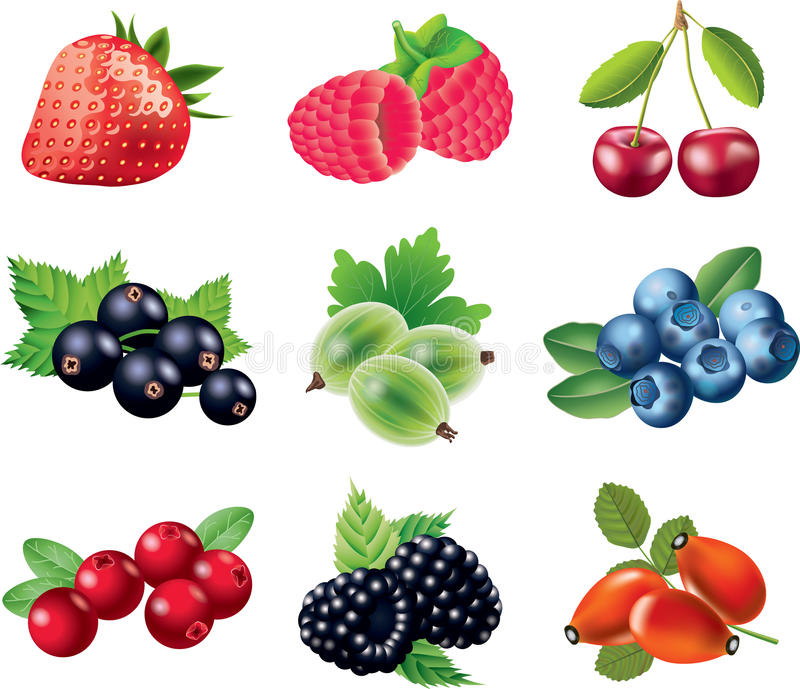 Berries photo-realistic set. Berries detailed photo-realistic set stock illustration