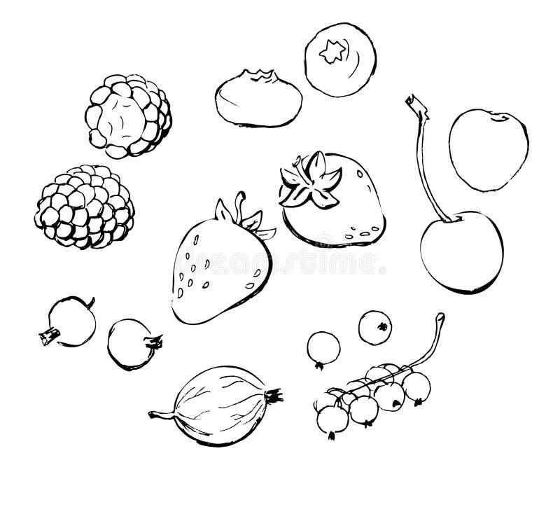 Berries doodles outline stock illustration