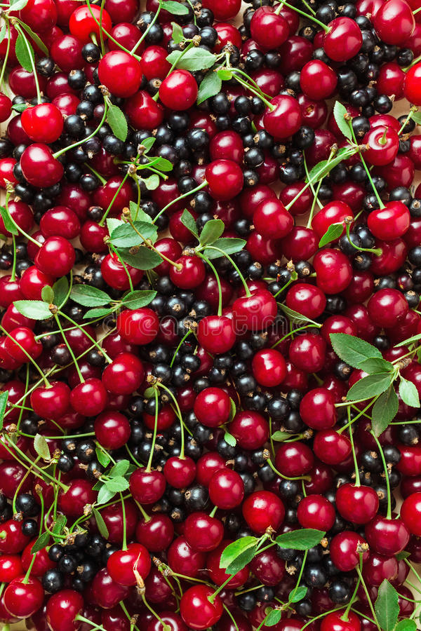 Berries. Fresh berries of cherry and black currant royalty free stock photo