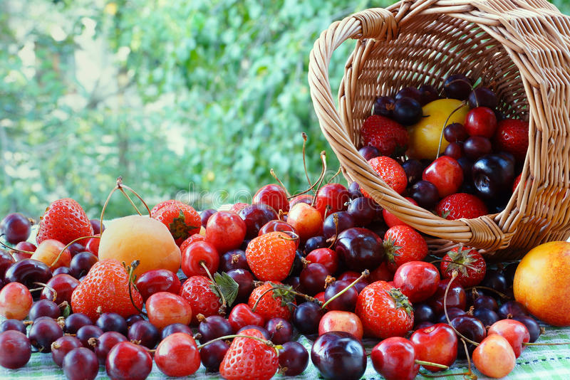 Berries and fruits scatter from the basket. Strawberries, gooseberries, cherries and apricots are next to inverted basket royalty free stock photography