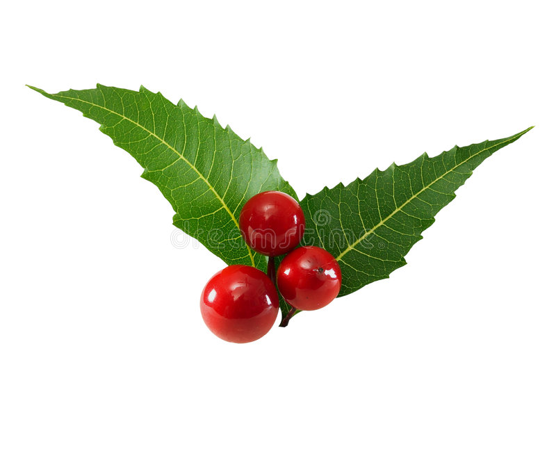 Berries and leaves. Picture for use in Christmas Celebration pictures stock photos