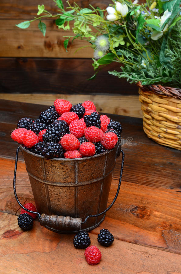 Berries in Pail on Rustic Wooden Table. Fresh picked blackberries and raspberries in a galvanized pail on a rustic wooden table. Vertical format stock images