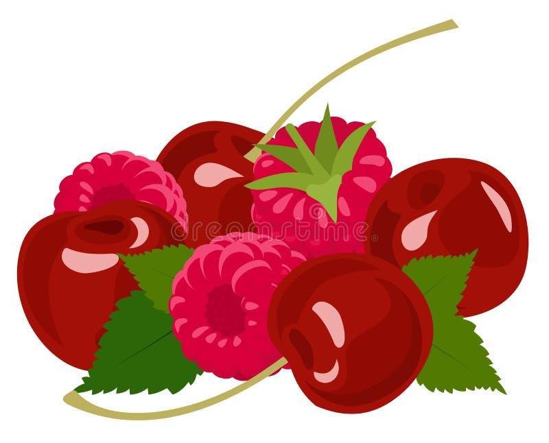 Berries. Raspberry and cherry on white. Vector illustration stock illustration