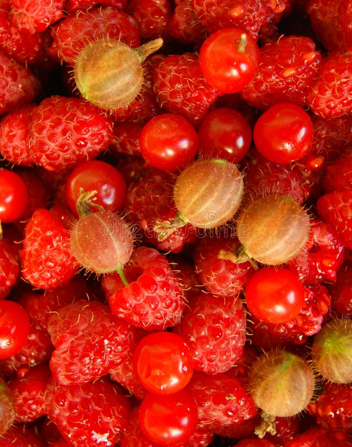 Berries raspberry,gooseberry and cherry. Bright background from ripe garden berries of the red colour stock photo