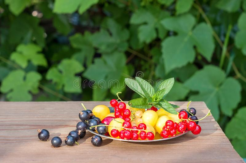 Berries of red and black currant, yellow cherry in a plate royalty free stock images