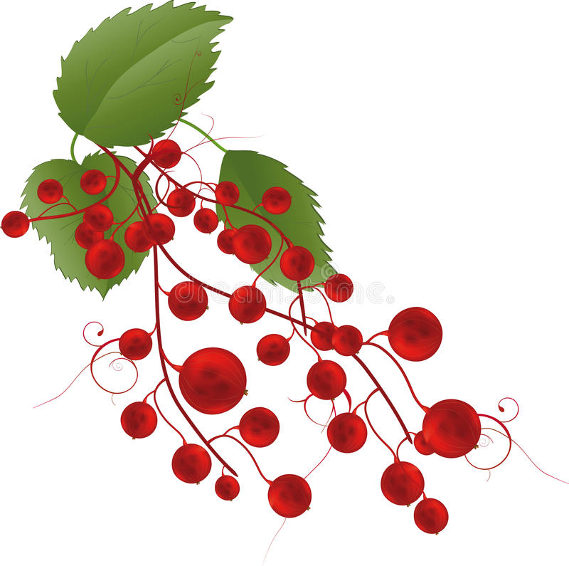 Berries a red currant. Plant food dessert stock illustration
