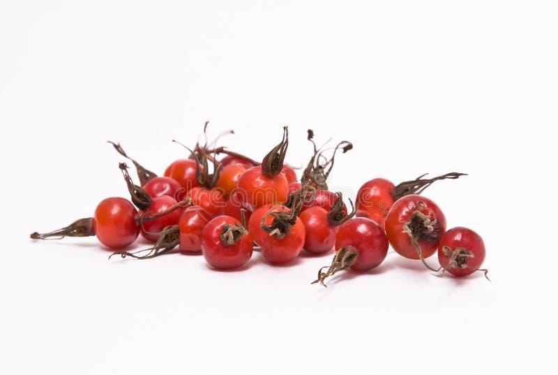 Berries of ripe briar. royalty free stock images