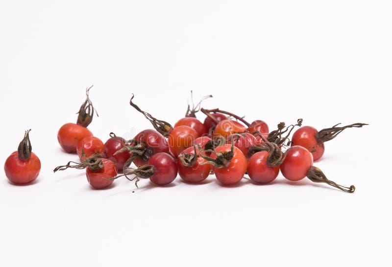 Berries of ripe briar. royalty free stock photos