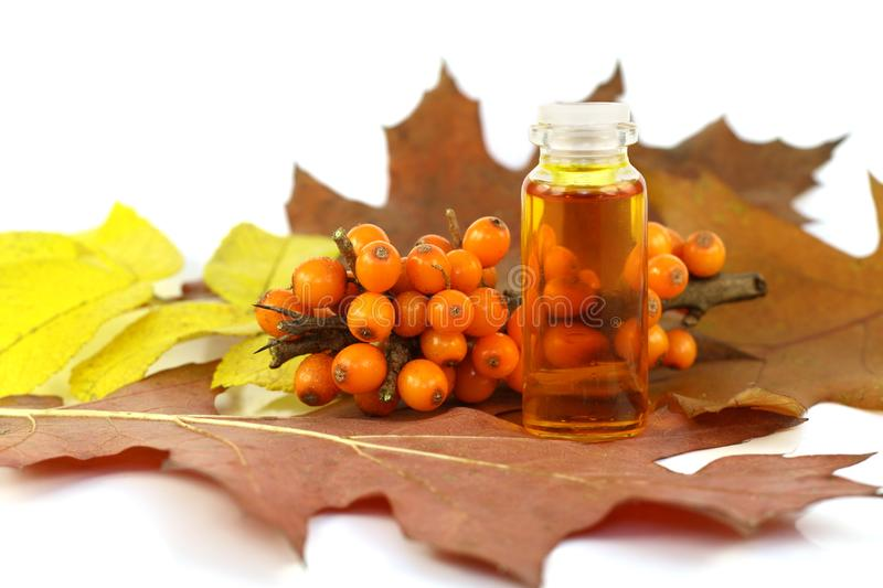 Berries of sea-buckthorn berries and medical oil royalty free stock photography