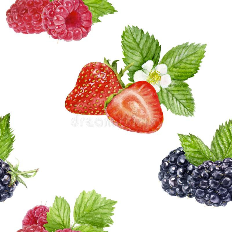 Berries seamless pattern watercolor illustration isolated on white vector illustration