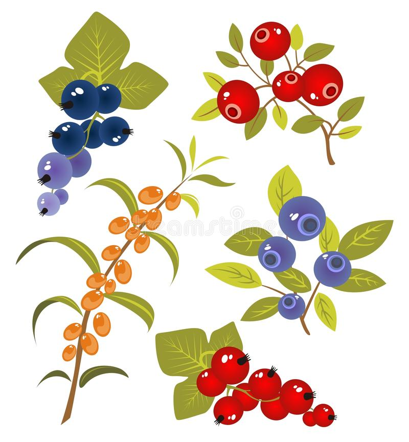 Free Berries Set Stock Photo - 10646760