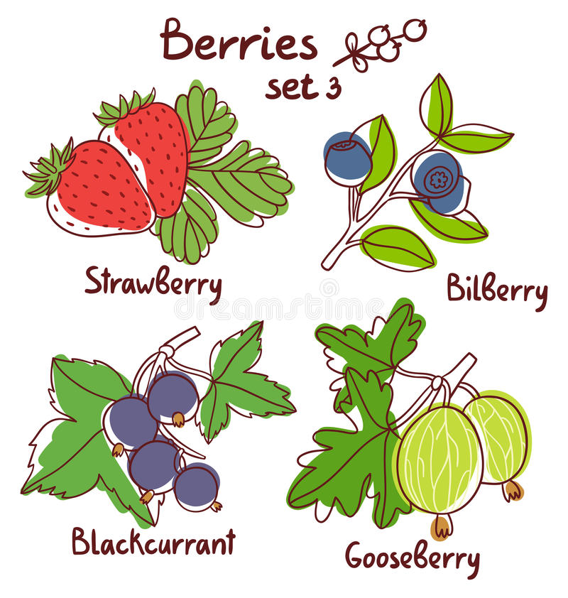 Berries set 3. Black currant, strawberry, bilberry and gooseberry berries set 3 stock illustration